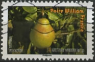 poire Williams, France