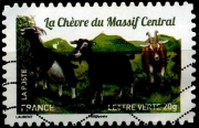 La chèvre du Massif Central